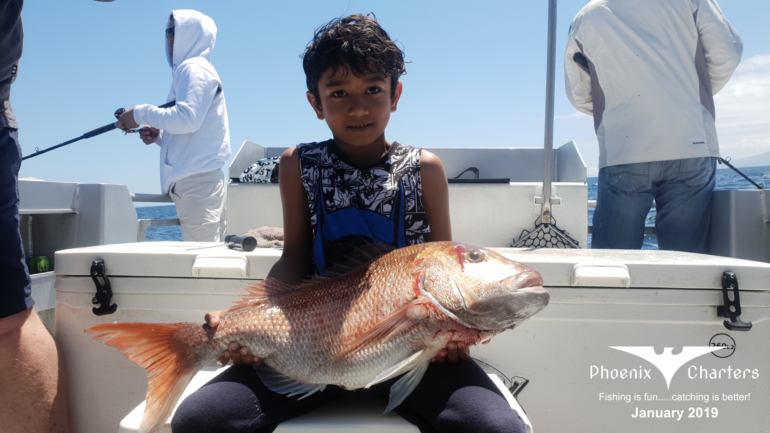individual-snapper-fishing-charters-auckland-january-2019